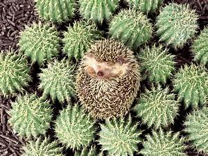 21 Spectacular Examples Of Animal Camouflage