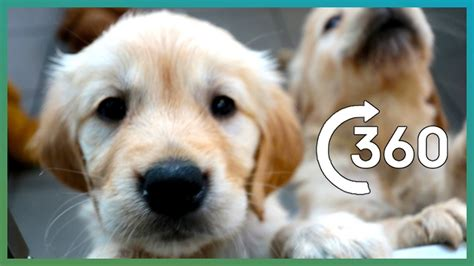 adorable puppy guide dogs   earth unplugged youtube