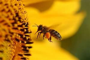 Lästiges Von Sich Schieben : bienen l stiges ungeziefer oder unentbehrliches nutztier stadtlandflair ~ Markanthonyermac.com Haus und Dekorationen