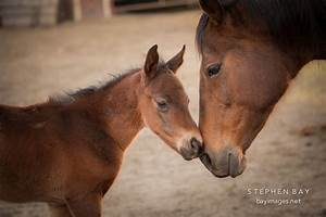Mother Horse And Foal images