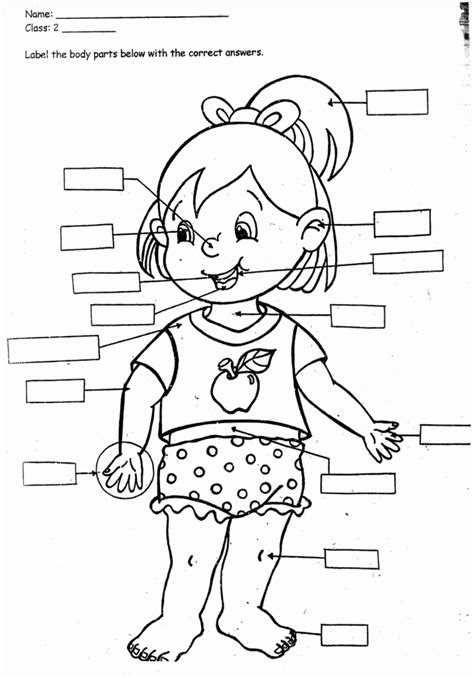 preschoolers coloring pages   human body coloring home