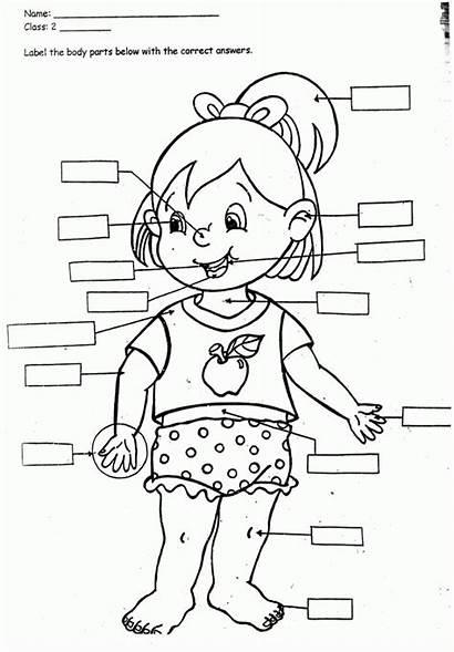Coloring Human Preschoolers Popular
