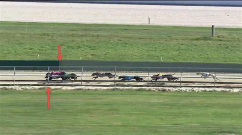 forbury park dunedin sectionals race form ltd