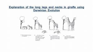 Theory Of Evolution  Theory Of Evolution By Natural