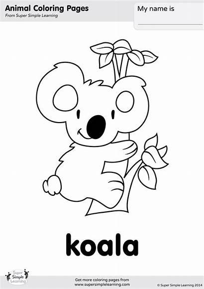 Koala Coloring Simple Worksheets Animal Bear Printable
