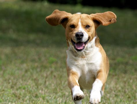 9 science-backed reasons to own a dog