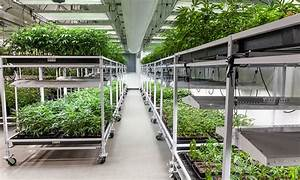 Big Pot & the Race for the 'Biggest Marijuana Grow ...