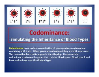 codominance  blood types punnett square generator