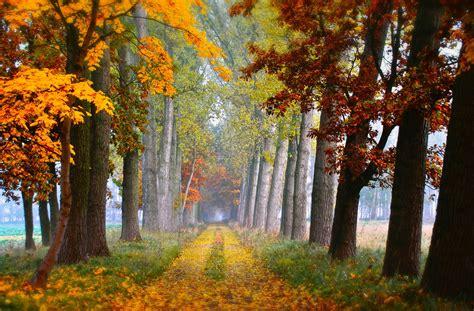 Beautiful nature of September wallpaper. Trees. Grass.