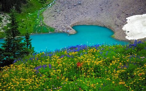 landscape spring meadow flowers turquoise blue lake ultra