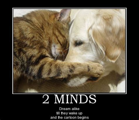 funny dog  cat demotivational signs cattime