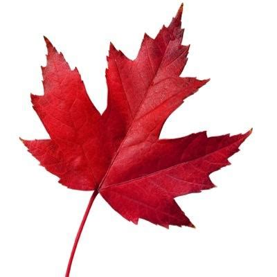 Red Leaf Photo 400x400 - Full HD Wall