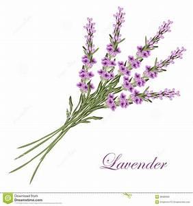 Lavender stock vector. Illustration of banner, design ...