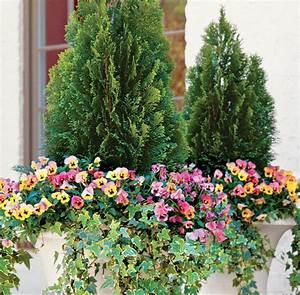 Kübel Bepflanzen Winterhart : gro e blumenk bel bepflanzen 60 ideen bilder und vorschl ge ~ Michelbontemps.com Haus und Dekorationen