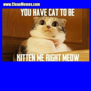 • • • bernie memes are so last week. wwwCleanMemescom YOU HAVE CAT TO BE KITTEN ME RIGHT MEOW Cat Memes - Page 13 - Clean Memes ...