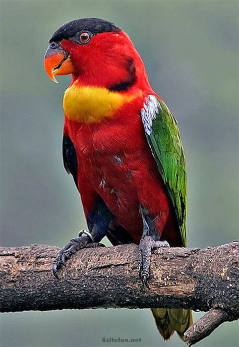 Adorable Beauty of Colorful Birds - XciteFun.net