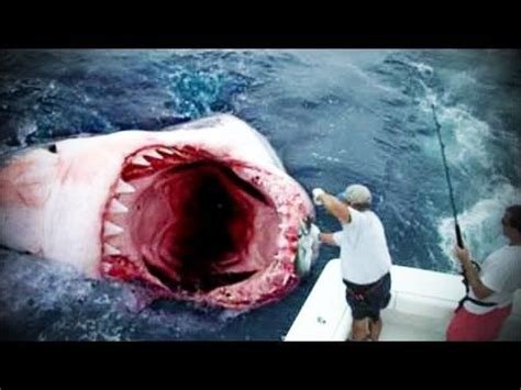 Jaws Boat Song Lyrics by 25 Best Ideas About Megalodon Shark On