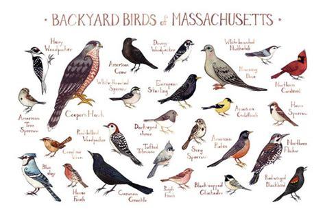 massachusetts backyard birds field guide art print