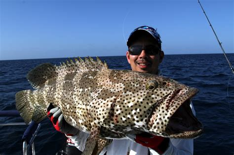 grouper cod australia fish catch fishing groupers lure caught similar reef barrier soft plastic howtocatchanyfish flowery
