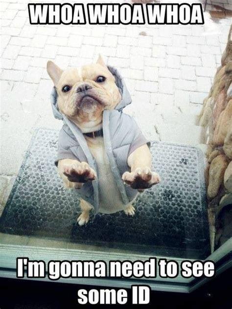 Pet Meme - 25 funny animal memes to make you laugh till you drop