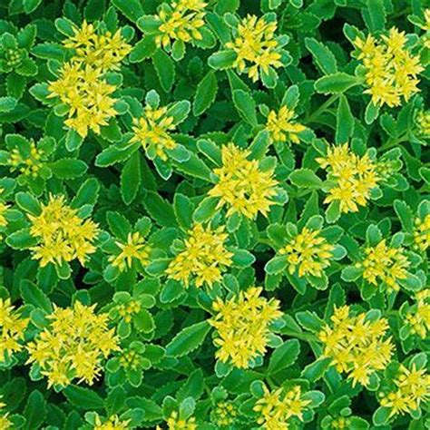 plants yellow flowers and evergreen on