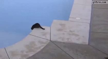 cat pushes  cat  swimming pool  funny gifs