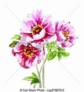 Blumen Bilder Gemalt : gemalt aquarell blume pfingstrose blume pfingstrose clipart suche illustration ~ Orissabook.com Haus und Dekorationen