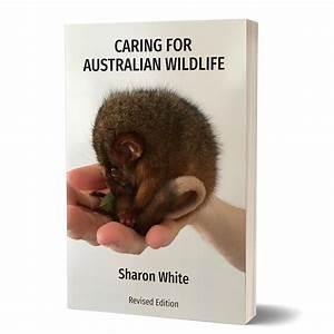 Caring For Australian Wildlife  U2013 Caring For Australian