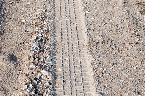 Car Tire Tracks In The Sand