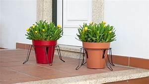 Decorative, Plant, Stand, U2013, Artevasi