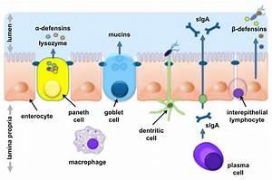 Intestinal Mucosal Barrier