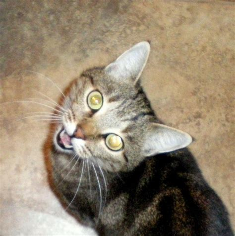sardines for cats with kidney disease