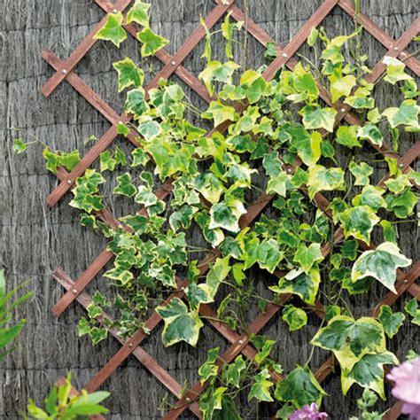 Expanding Wooden Garden Climbing Plant Trellis Fence Panel