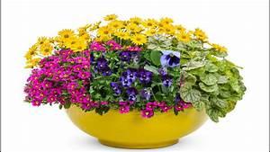 Macetas De Flores Las M U00e1s Grandes Y Lindas Del Mundo