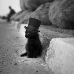 and pictures and more baby black cat in top hat