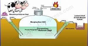 Peternakan  Biogas Dari Kotoran Sapi