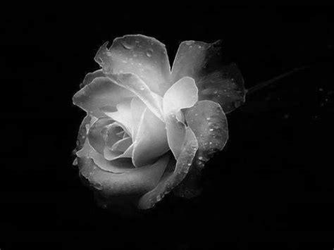fiore di cristallo profumato e fragile un fiore di cristallo io