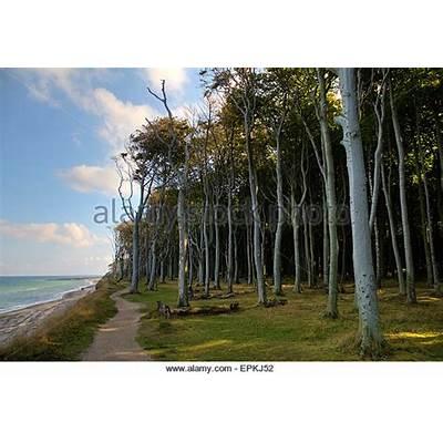 Nienhagen Wood Stock Photos & Images