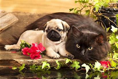 Cat Flowers Dog Cats Wallpapers Dogs Puppy