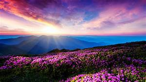 Purple, Flower, And, Mountain, Landscapes