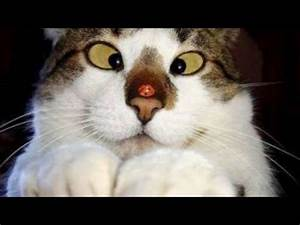 Most Funny Cat Picture Ever Pictures to Pin on Pinterest ...