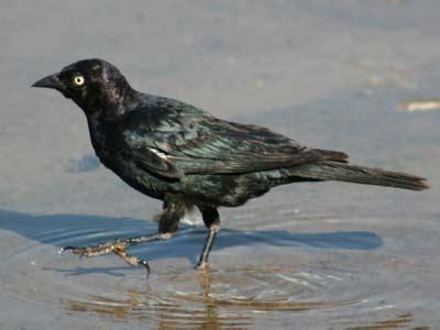 top 28 birds unlimited tucson the wild bird store in