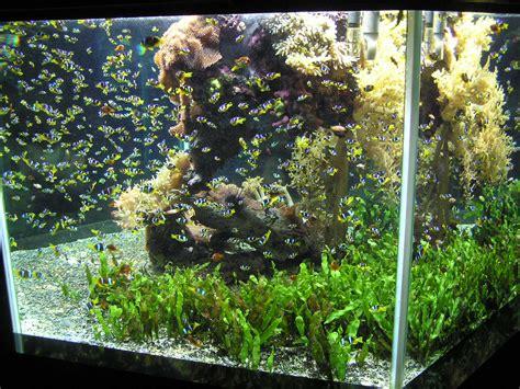 neon pour aquarium file aquarium monaco3 jpeg wikimedia commons