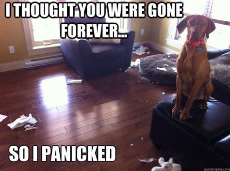 fool proof remedies   dogs heartbreaking