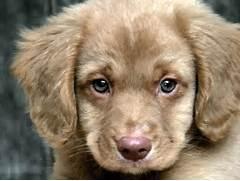 Sad Puppy Face - EchoM...Sad Puppy