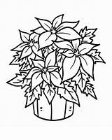 Coloring Pages Poinsettia Flower Bucket Print Colouring National Christmas Fresh Flowers Printable Plant Template Sheets Netart Bloom Chaconia December Preschool sketch template
