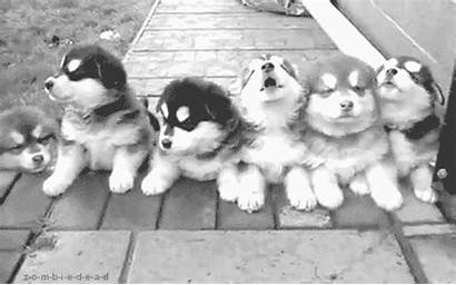 Dog Gifs Funny National Adorable Dogs Puppy