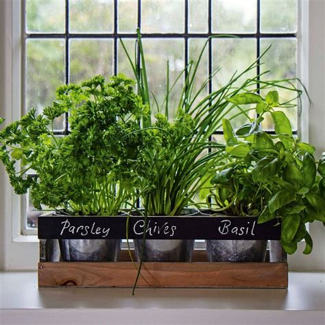 garden planter box wooden indoor herb kit kitchen seeds