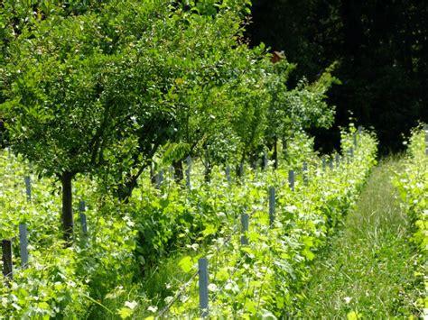 chambre d agriculture 40 agroforesterie les pièges à éviter