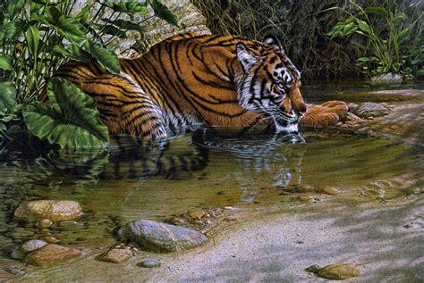 Jungle Animal Wallpaper - jungle animal wallpaper wallpapersafari